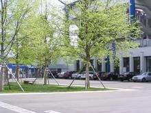 Drzewa dodają atrakcyjnego wyglądu betonowej parkingowej powierzchni.